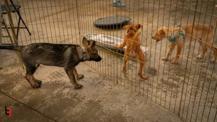 littermate puppies